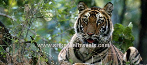 Periyar Tiger Trail