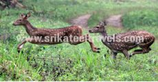 best tour packages in Mangalore