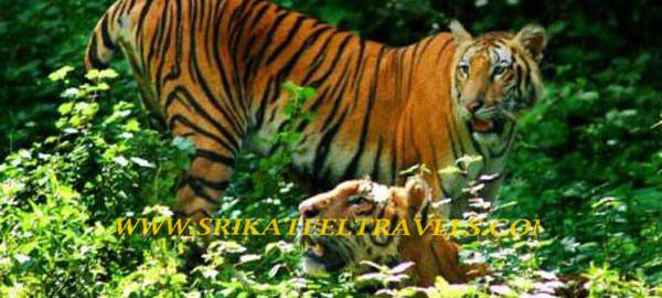 Tours and Travels in Mangalore